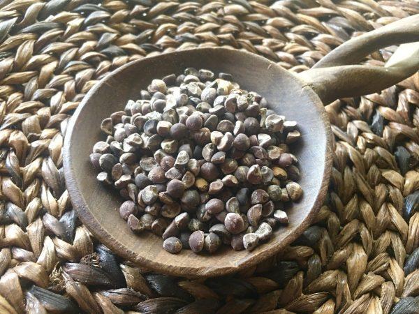 Hawaiian Baby Woodrose Seeds (Argyreia Nervosa)
